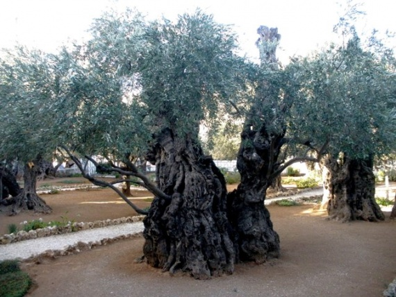 Гефсиманский сад.